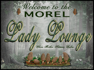 Morel Lady Lounge blog
