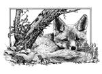 Rusty fox 150
