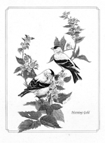 Goldfinches pencil on Lintex brd 150