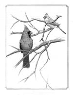 Cardinals pencil 150