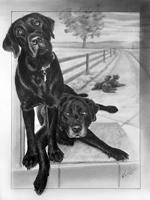 Tina dogs final 150