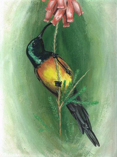 Artex Hummingbird