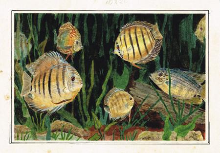 Fish Artex sketch